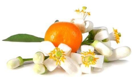 essenza fiori d arancio propriet 224 dell olio essenziale di arancio oli essenziali