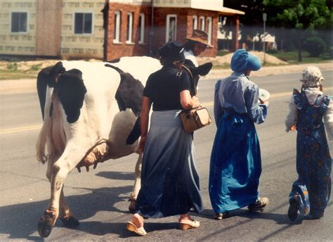 Amish Dining Room by Animals Mennonites And The Modern World Niche