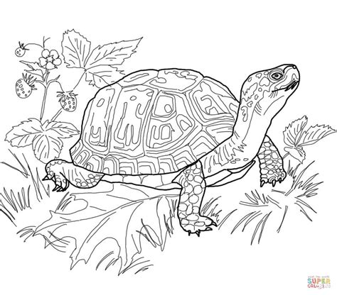 hard turtle coloring pages 69 dessins de coloriage tortue 224 imprimer sur laguerche