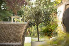garten pflanzen die wenig wasser brauchen schirmf 246 rmige b 228 ume 187 die sch 246 nsten im 220 berblick