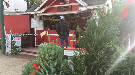 best christmas tree farms in washington state popular nipomo tree farm opens for the holidays ksby
