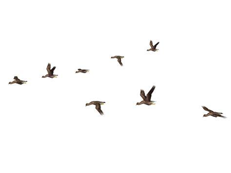 flying bird png photos png mart