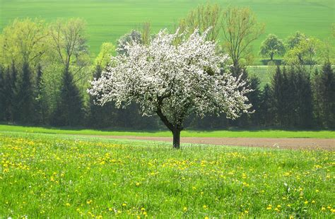 cross pollination fruit trees you won t get apples without cross pollination