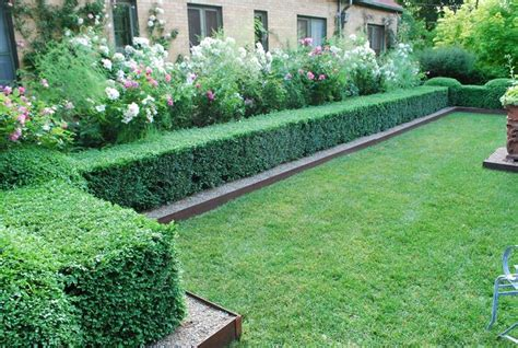 prezzi siepi da giardino costo siepe siepi quanto costa una siepe