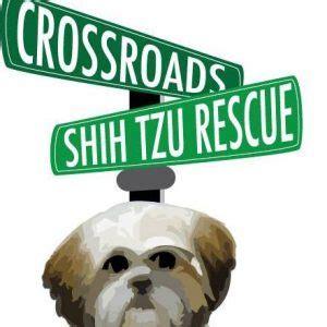 crossroads shih tzu rescue tallahassee fl shelter spotlight crossroads shih tzu rescue 1 800 petmeds cares