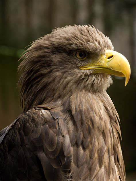 Furadan 3d serbia protected eagles found poisoned
