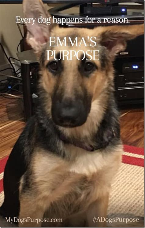 trailer for a s purpose a s purpose giveaway adogspurpose momstart