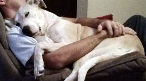 most affectionate breeds the 10 snuggliest breeds rover