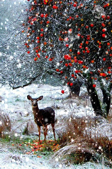 new year animal places moving snowing winter photo moving