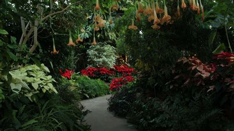 luthy botanical gardens enjoy illinois