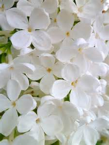 White Flower Images by 17 Best Images About Flower In White On Pinterest White