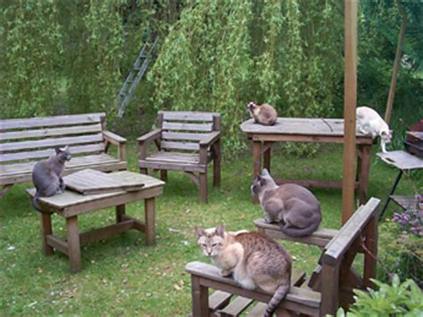 how to keep cats outdoor furniture la animal marvelous site on outdoor cat enclosures with links