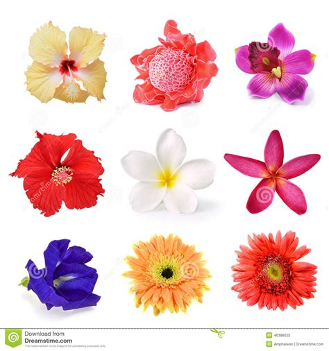 Flower Collection set of flower collection 001 vector illustration