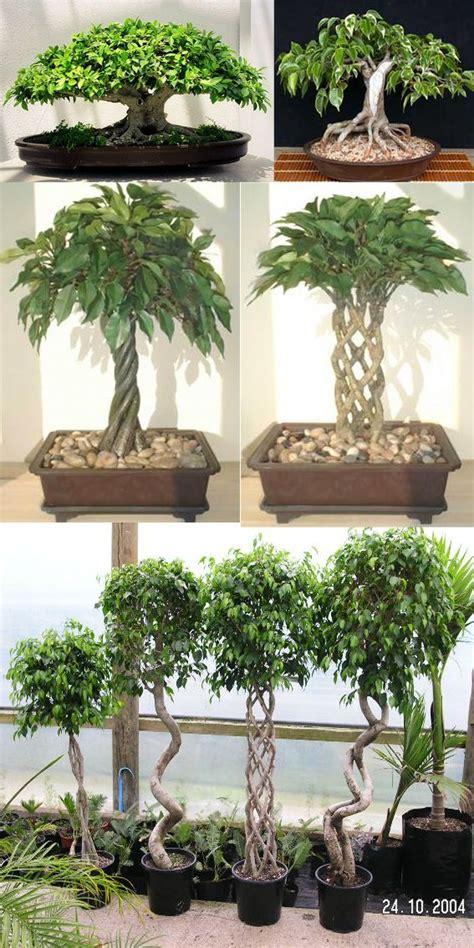 best grow light for bonsai 25 best ideas about indoor bonsai on pinterest indoor