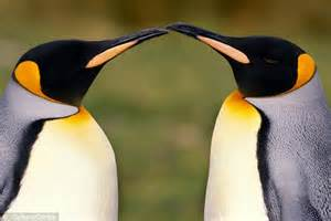 what colors are birds attracted to i m bringing beak penguins are attracted to colours
