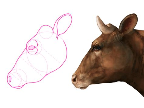 scow head how to draw animals cows and other bovines