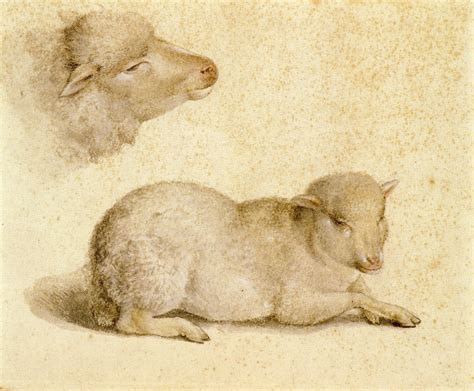 file resting lamb and head of a lamb by hans holbein the