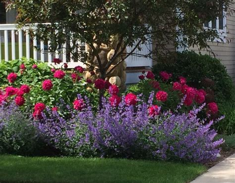 Landscape Ideas Using Knockout Roses Best 25 Knockout Roses Ideas On What Is Oasis