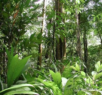 plants found in the tropical rainforest biome matelic image tropical rainforest biome plants