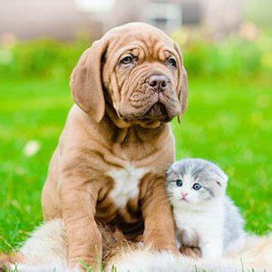 whos smarter cats or dogs who s smarter or cat