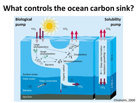 carbon sink carbon sink climate change sinks ideas