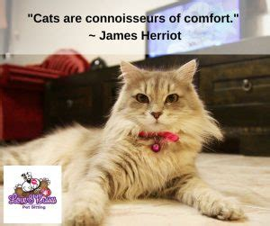 how to comfort a sick cat how to tell if your cat is sick pet sitter dog walker