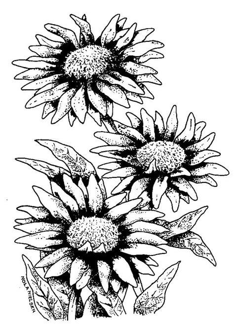 Line Drawings Of Flowers
