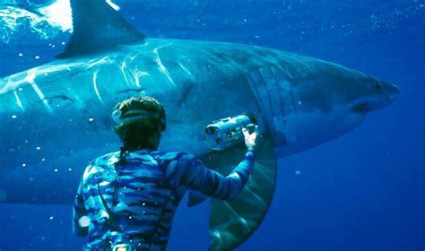 peligro en el mar 8467502584 tiburones en peligro de extinci 243 n y sus principales amenazas