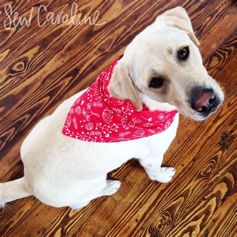 bandanas for dogs the 25 best ideas about bandana on choke collar for dogs diy