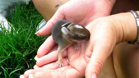 what to do with baby bunnies in backyard baby bunnies in my yard doovi