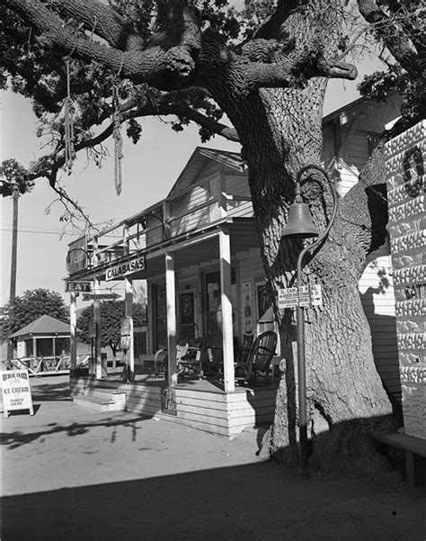 Japanese Homes For Sale witness to a hanging california s haunted trees kcet
