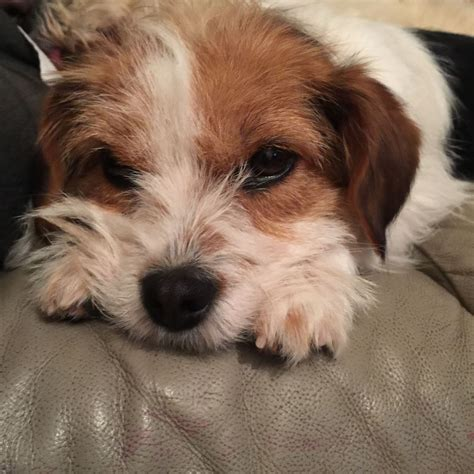 Small Dogs Looking For New Home Small Looking For A New Home Havant Hshire