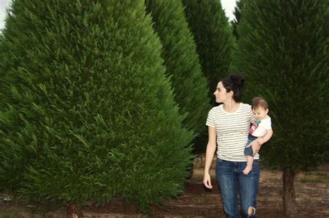 alabama christmas tree farms stay evergreen despite