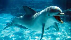 Dolphin animal pictures to pin on pinterest pinsdaddy