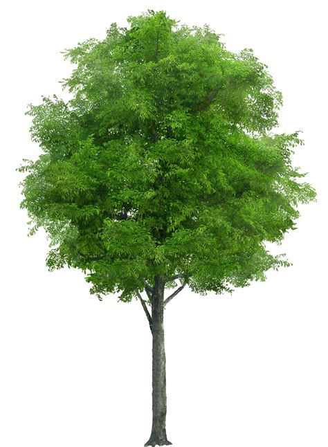 Color Suggestions For Website Realistic Tree Png Image Purepng Free Cc0 Png Image