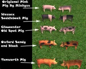 Pig types breeds mod the sims rare british pig breeds 4 pig