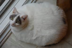 the fattest cats on the internet