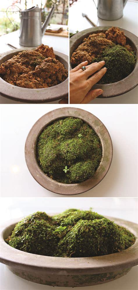 indoor moss garden kit diy terrarium moss graffiti 28 moss and succulent terrarium garden