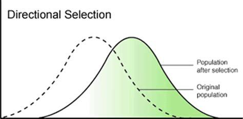 patterns of evolution pioneer biology