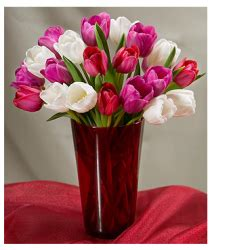 tulips or roses for valentines flower pictures p 2