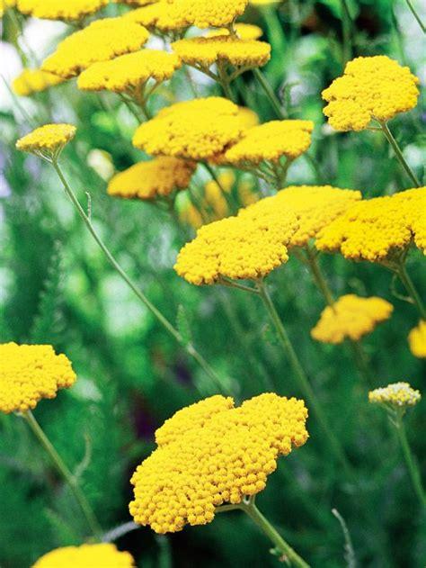 fall blooming perennials on pinterest perennials 1000 ideas about full sun garden on pinterest full sun