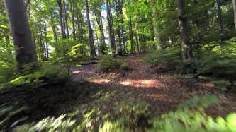 wilderness background woods forest trees background green nature landscape