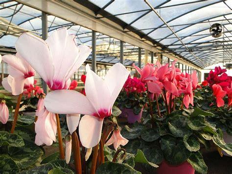 vendita piante e fiori vendita fiori e piante come gestire lu irrigazione di