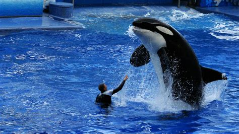 Could Millions Get Money Back from SeaWorld Florida Over