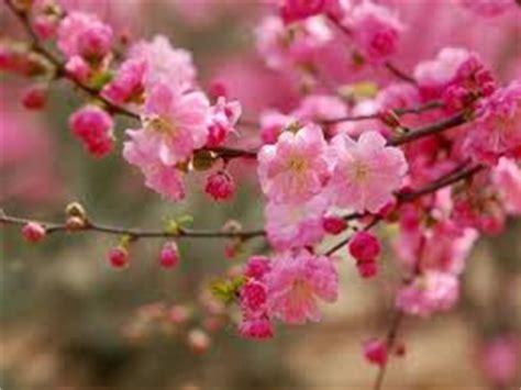 Arti Dari bunga nama dan arti bunga dari a z