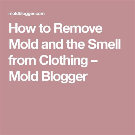 How To Remove Mold From Closet 1000 ideas about remove mold stains on remove mold how to remove and to remove
