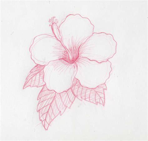 imagenes de flores para dibujar a lapiz grandes c 243 mo dibujar flores hawaianas ehow en espa 241 ol