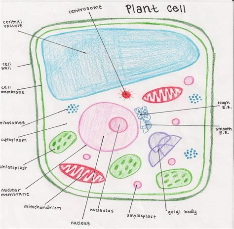 sketch and label a section of the cell membrane edible cell analysis