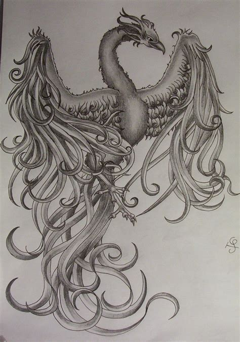 best phoenix tattoo designs tattoos drawings www imgkid the image kid