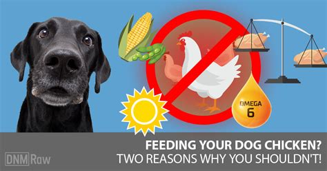 feeding dogs chicken chicken for dogs why i stopped feeding it dogs naturally magazine